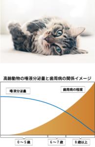 高齢動物の唾液分泌量と歯周病の関係イメージ