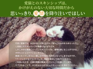 愛猫とのスキンシップは、思いっきり愛情を注いで欲しい